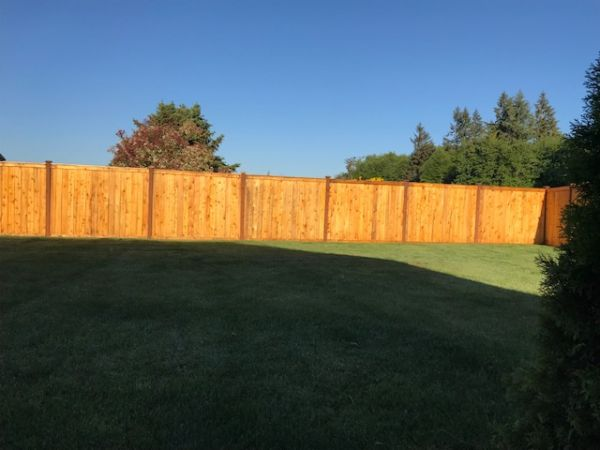 TWP 115 on Pressure Treated Fence